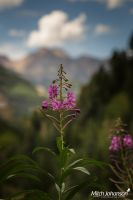 The View Behind the Flower  by mjohanson