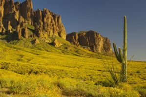 Superstitions with Brittlebush by PatGoltz