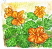 Nasturtiums by ZOMGwingly