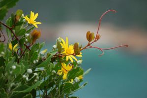 Cliff Side Yellow Beauty by Storms-Stock