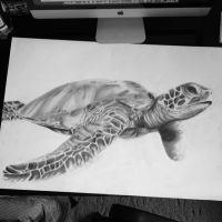 turtle drawing by Jordanlee17