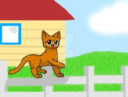 Ginger the house cat by MaiMaiYay