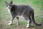 Grey Tabby Cat Lookback by CompassLogicStock