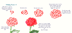 How to Draw: Roses by matomiki