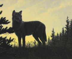 Midnight Hunt - Black Wolf by CitizenOlek