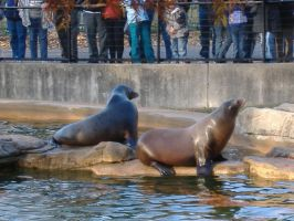 More Hungry Sea Lions by gamergoth