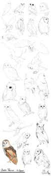 Owls Practice by Charneco