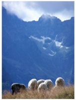 Sheep in mountains by Buaha