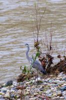 Heron by AndreaMetallurgico
