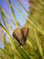 another butterfly by aripi