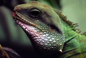 Green Lizard Close Up by 8TwilightAngel8