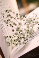 In the heart of a book. by Alessia-Izzo