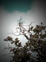 BRANCHING OUT by ANDYBURGESS