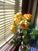 yellow roses by zowey