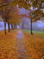 Autumn leaves by NataliaLupin