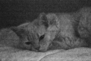 High ISO: Long Exposure Meow by wetdryvac