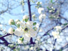 Spring Comes by limeflowery