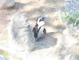 penguin by Endeavor4ever