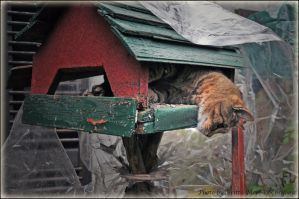 In the bird feeder 2 by brijome