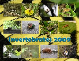 Invertebrates 2009 by Cillana