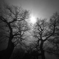January trees by lostknightkg