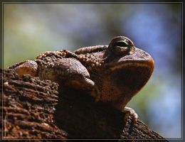 Fowler's Toad 40D0038934 by Cristian-M
