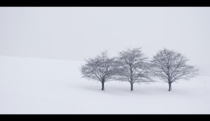 Three Trees by mARTinimal