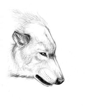 Wolf Sketch .02 by Mew-Suika