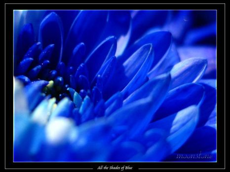 All the shades of blue_01 by e-moonstone