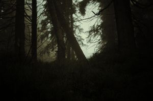 Forest, again by Topielica666