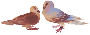 more pigeons by edelilah