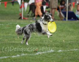 DiscDogs 4 by Deliquesce-Flux
