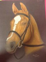 Horse portrait (pastel) by Ariana-1997