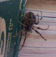 Book Spider by lny