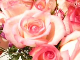 Roses by Pictwii