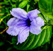 Flower from Bush by rajjib