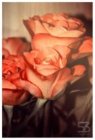 Roses IV by misery53