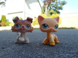 My Lps Popular Lps by hannahluvzlps