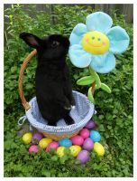 Easter Bunnies: Jerry by Cillana