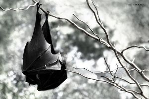 hanging by quemas