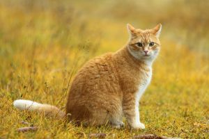 Orange Cat Is Orange by janernn