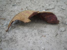Crumbled leaf 2 by Insan-Stock