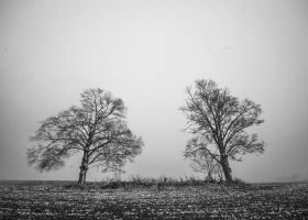 Two Trees Arguing by copperrein