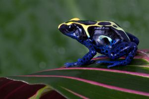 Dartfrog 2 by AngiWallace