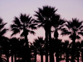 Palm trees by Natiaaa