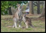 Standing on mum's foot by VJD-Communication