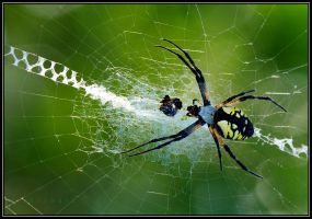 spider2 by RichardRobert