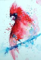 Cardinal. watercolor painting by tilenti