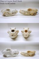 Dog vs Coyote Skull Stock by AcidConfetti