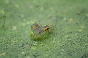 Camoflage by mandolinphotography